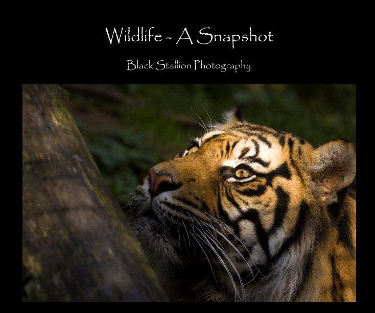View Wildlife - A Snapshot by kurienkoshy