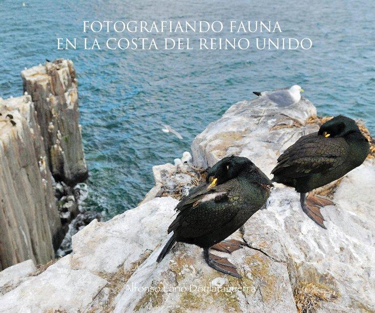 Ver FOTOGRAFIANDO FAUNA EN LA COSTA DEL REINO UNIDO por Alfonso Lario Doylataguerra