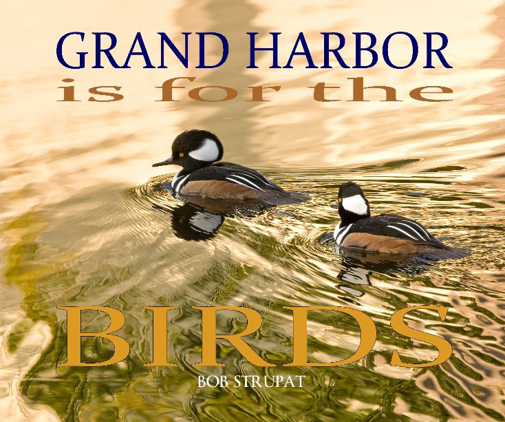View Grand Harbor Is For The Birds by Bob Strupat
