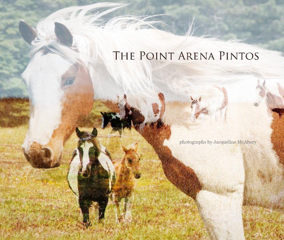 View The Point Arena Pintos by Jacqueline McAbery