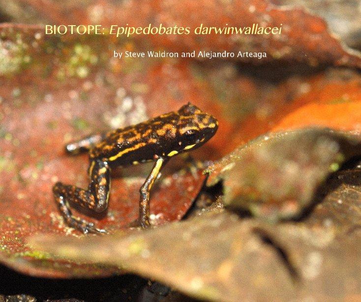 View BIOTOPE: Epipedobates darwinwallacei by woodydebris