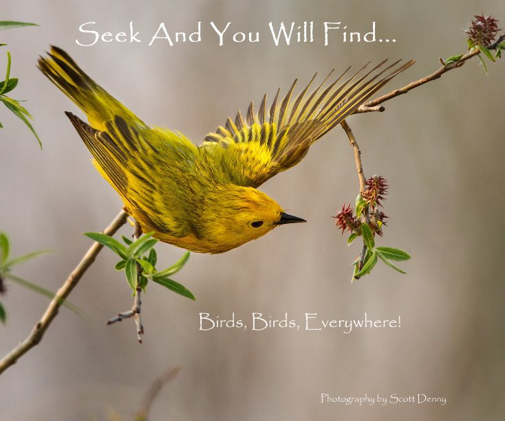 View Seek And You Will Find... by Photography by Scott Denny
