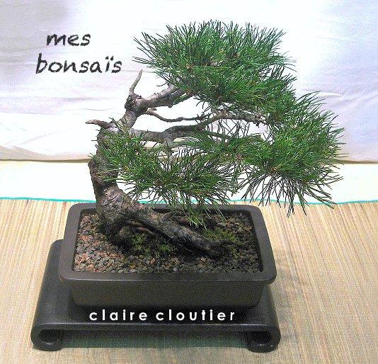 View mes bonsaïs by c l a i r e c l o u t i e r
