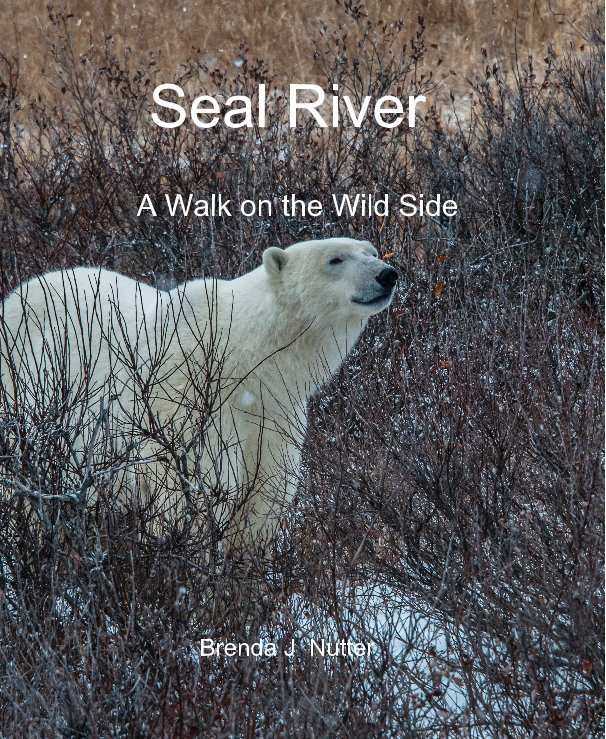 View Seal River by Brenda J Nutter