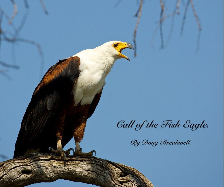 View Call of the Fish Eagle. by Doug Breakwell.