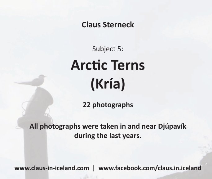 View Subject 5: Arctic Tern (Kría) by Claus Sterneck