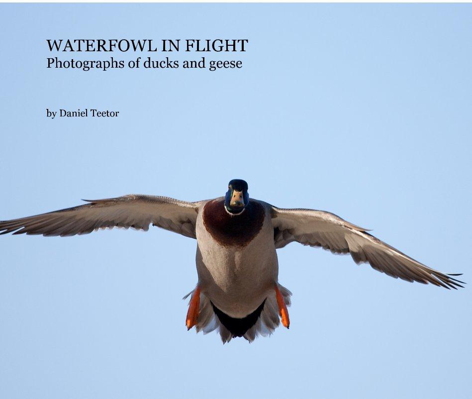 View WATERFOWL IN FLIGHT by Daniel Teetor