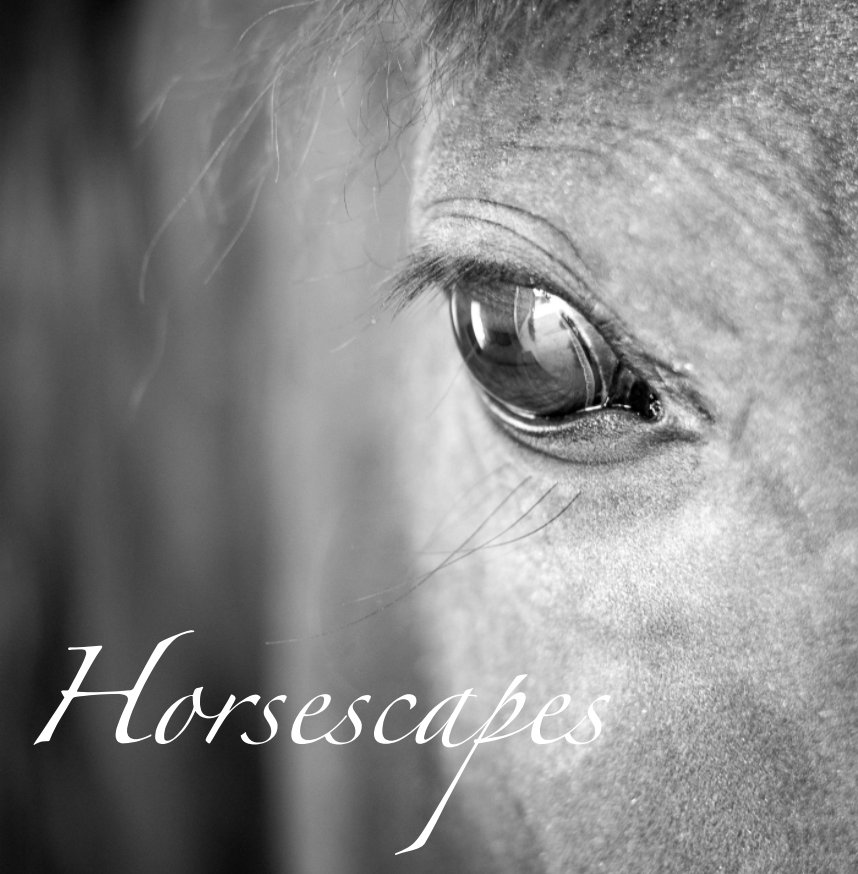 View Horsescapes by Timothy Floyd