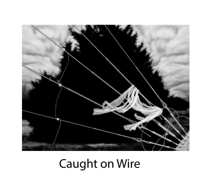 View Caught on Wire by Don Russell