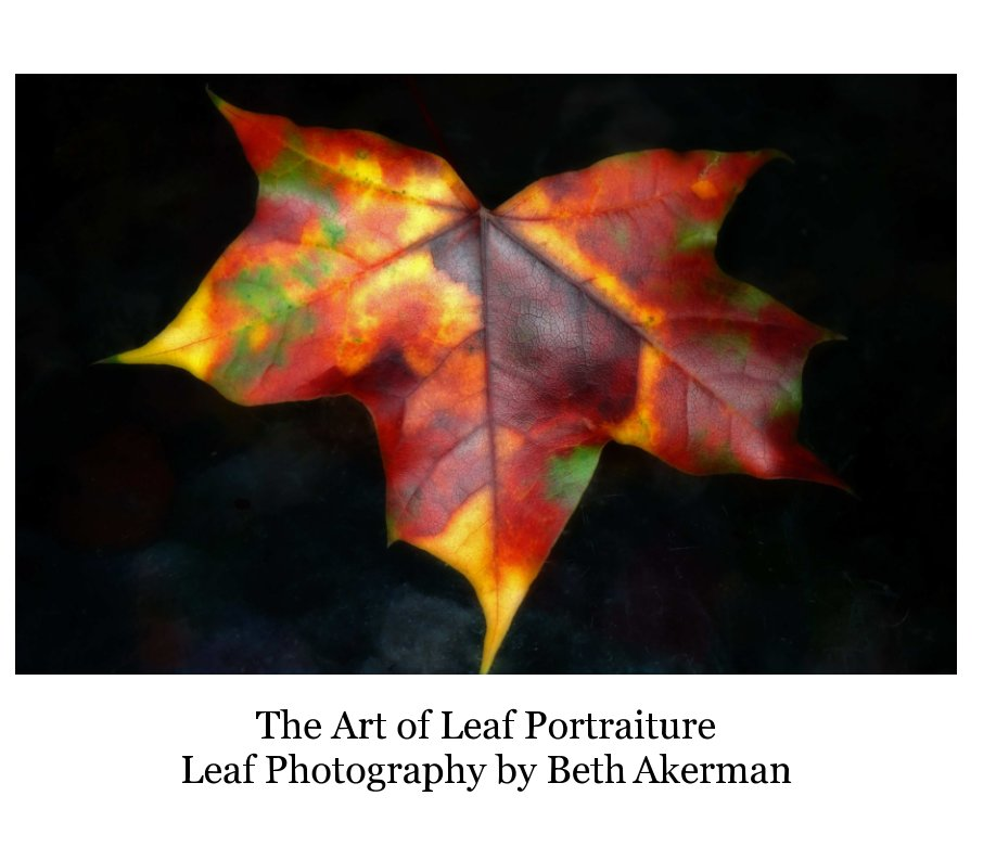 View The Art of Leaf Portraiture by Beth Akerman