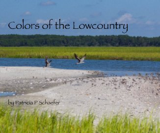 Colors of the Lowcountry by Patricia P Schaefer